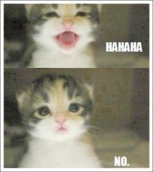 """The cat says """"Ha Ha... NO"""""""